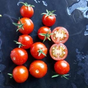 Cherrytomaten - Samen