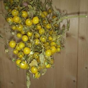 Multiflora Sorten