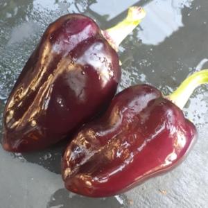 Paprika - Samen