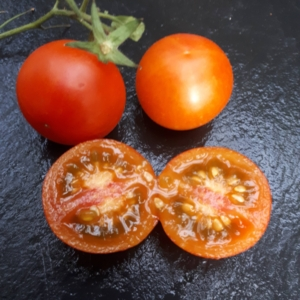 Normale Tomaten - Samen
