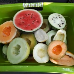 Gurken, Melonen & Co